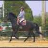MicKey-monte-A-cheval