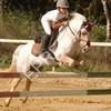 poney-concours