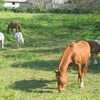 ptites-vips-love-horse