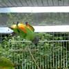 max-oiseaux