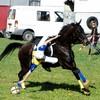 jockey-horse