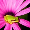 ptite-grenouille-blonde