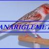 canariglemet