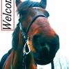 HorseRiding-x3