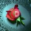 alg3rie-love