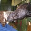 horses-love33