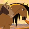 love-horse-love298
