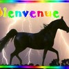 i-love-horses007