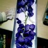 flowerspassion