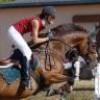 Horse-s-Dream
