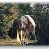 passion-des-chevaux-76