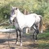 ranch-des-salins08