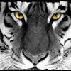 tiger-x