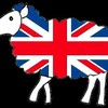 BRiTiSH-SHEEP-x3