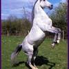 my-reve-chevaux