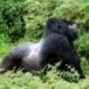 rwanda59-94
