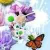 butterfly1234