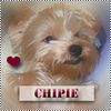 Officiel-Chipie