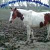 danger-d-chevaux