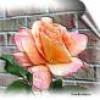 dounia-la-rose