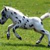chevauxmeconnus