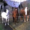 folle-2-chevaux
