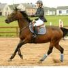 materiel-d-equitation