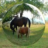 horse-du-29