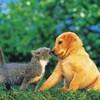 love-animaux81