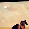 love-horse57