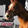 caribou5601