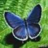 PtitPapillon51