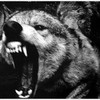weiss-wolf-kommando