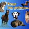 love-animaux84