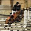 Q-horses