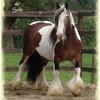 chevaux190