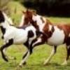passiion-chevaux-51