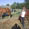 x3-Mzlles--horses-x3