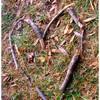 cas-rat-terre-riz-ailes