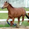 horse2710