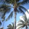 florida-state