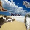 prince-horse