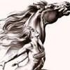 chevauxbelfort