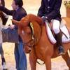 concours-poneys