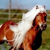 L0V3HORSES