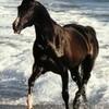 chevauxdu43