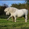 pictures-of-horses