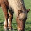 lovehorses95