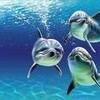 niniedauphins