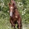 0o-horses-4ever-o0